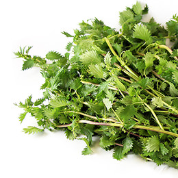 Nettle root testosterone
